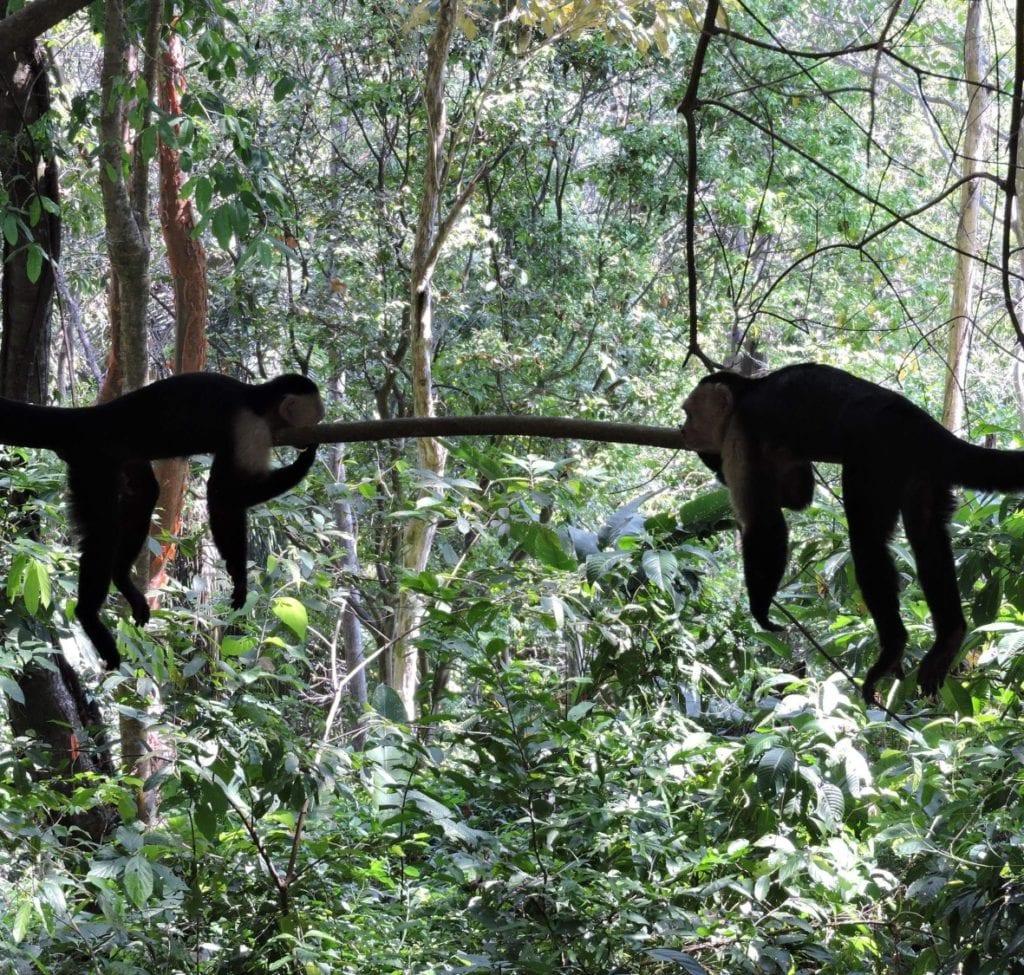 Costa Rica Nature & Family