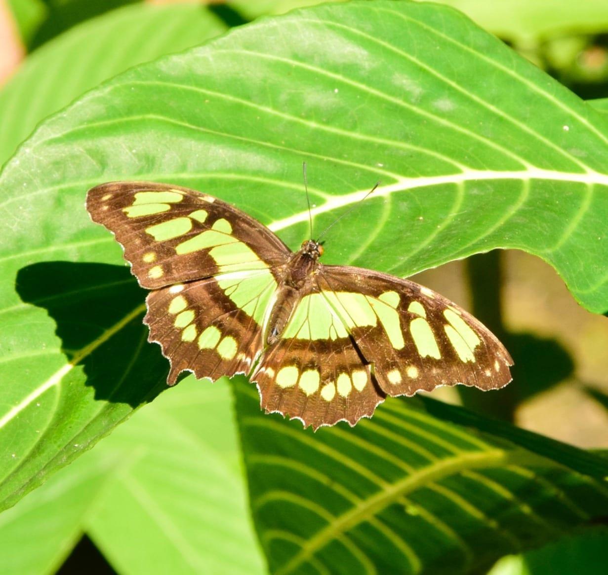 Roopa C. (USA)