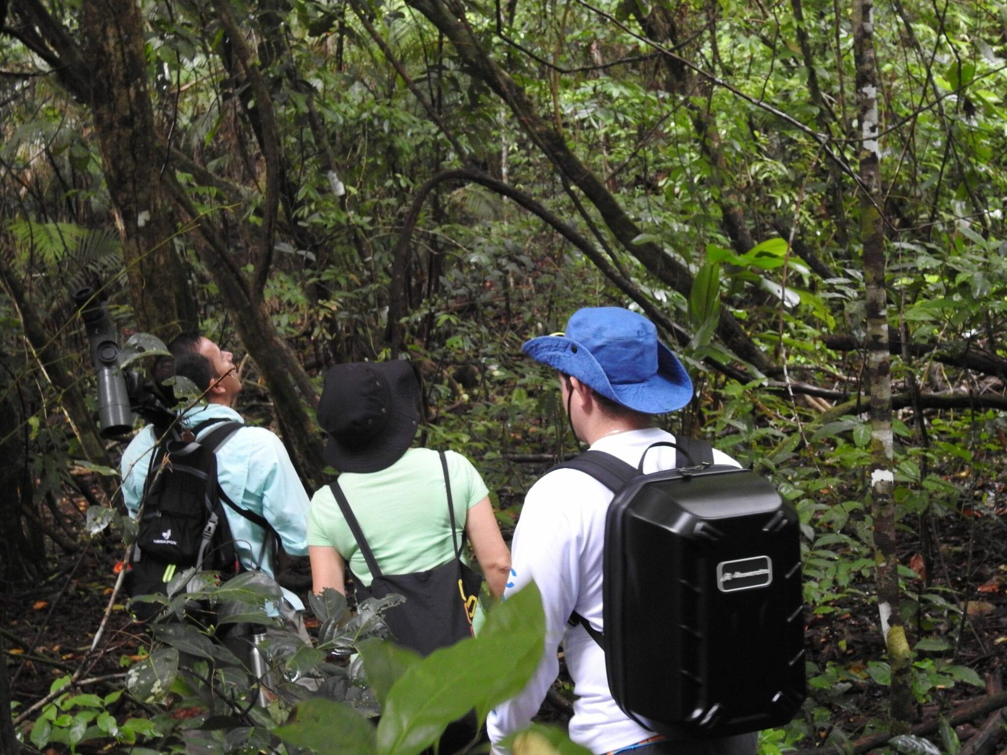 Hiking Corcovado